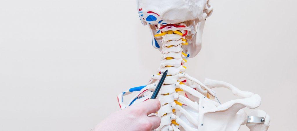 Image de fond article Oxteo - Squelette